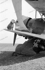 HS 123-bataille escadron-schg-LG-AVIATION - AVION-chien-teckel - 118