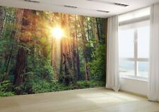 Sunny Redwood Forest Wallpaper Mural Photo 39557084 budget paper