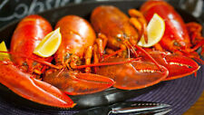 Get Maine Lobster - 10lbs Live Maine Cull Lobsters w/ FREE SHIPPING