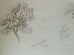 Late 18th c. FRENCH School OLD MASTER DRAWING 'Tree branches' - nice WATERMARK