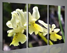 Quadri moderni paesaggi ORCHIDEA VOL IV fiori stampe su tela canvas 130x90