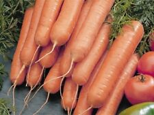 5g (approx. 5000) carrot seeds NANTES 5 best for using fresh, canning, storing