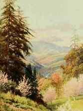 A4 Photo Palmer Harold Sutton 1854 1933 California 1914 Santa Cruz mountain the