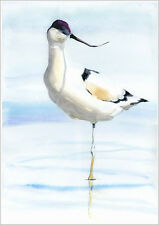 HELEN APRIL ROSE Limited Print of my AVOCET bird art watercolour 166