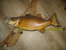 """Real Skin Mount Small Mouth Fish Taxidermy 19"""""""