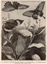 PAPILLONS BUTTERFLY KALLIMA PARRALECTA INDONESIE INDONESIA IMAGE 1872 PRINT