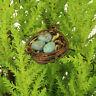 Birds Nest & Robins Eggs ~ fairy garden ~  miniature ~ handmade by Jennifer