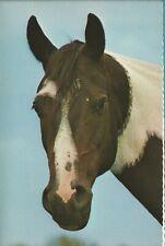 1970's Five Horse Equine Portraits On Jumbo Postcards Unused Excellent Condition