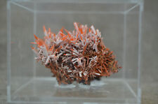Red Crocoite Crystal Specimen in perky box Dundas Mine Tasmania Australia