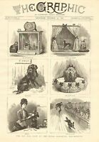 Toy Dog Show At The Royal Aquarium, Westminster, Vintage 1886 Antique Art Print