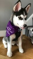 THERAPY DOG/WARNING//SPACE NEEDED  PERSONALISED EMBROIDERED DOG BANDANNA 7 SIZE