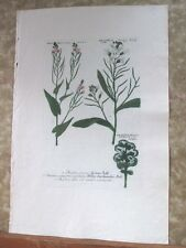 "Vintage Engraving,BRASSICA,C.1740,WEINMANN,Botanical,20x13.5"",Mezzotint"