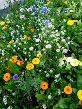 Blühende Insekten Bienen  Wiese  >>Wildblumen<<  bunte Mischung -- Portion--