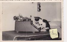 OLD PHOTO CAT KITTEN TYPING TYPEWRITER COMIC HUMOUR ANIMAL PET SECRETARY