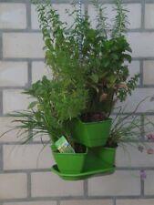Kräuterampel,grün, Blumenampel, Pflanzenampel, Hängeampel, Blumenpyramide