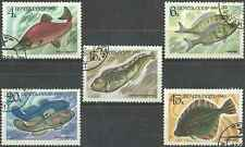 Timbres Poissons URSS Russie 5017/21 o lot 12982