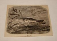 1880 magazine engraving ~ THE PIKE