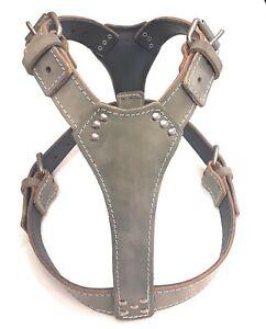 Beautiful Plain Grey Leather Dog Harness fit any Large Size dog like Staffy...