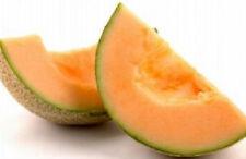 "17.2g Organic ""Honey Rock"" Cantaloupe 500 Seeds Succulent Melon Northern Variety"