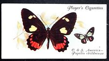 American Swallowtail Butterfly   Superb Vintage 1930's Colour Card  # VGC