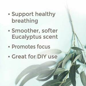Plant Therapy Essential Oils Eucalyptus Radiata 100% Pure, Undiluted, Natural