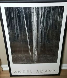Aspens, Northern New Mexico by Ansel Adams Embossed Authorized Edition