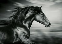 A4| Beautiful Black Horse Poster Size A4 Stallion Animal Poster Gift #14332