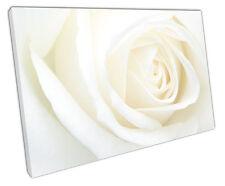 WHITE Rose a Muro ARTE foto di grandi dimensioni 75 x 50 cm