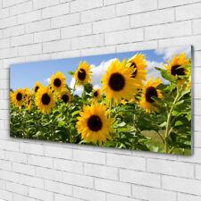 Impression sur verre acrylique Image tableau 125x50 Floral Tournesol