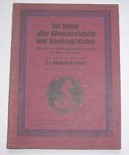 Die Kultur aller Blumenzwiebeln und Knollengewächse 1925 Schmidt Erfurt !