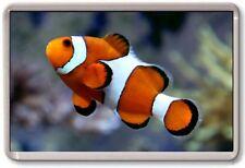 FRIDGE MAGNET - CLOWN FISH - Large - Nemo Nature Wildlife