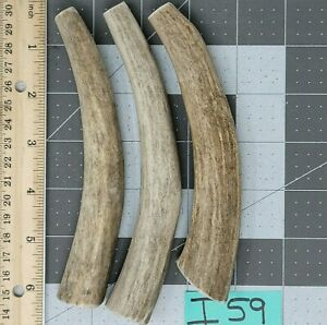 3 Small Whole Softer More Marrow Deer Antler Treat & Toy for Dogs Lot