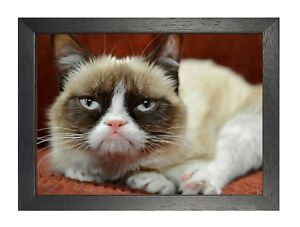 Cat 3 Beautiful Little Puppy Poster Sweet Cute Animal Funny Face Grumpy Kitty