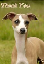 Italian Greyhound Thank You Card by Starprint