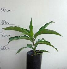 Plant Tree Dry Climate Fruit Plants