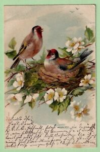 LITHO Künstler AK Pärchen Distelfing Vögel Nest  21.3.1902 Antique PC Card Birds