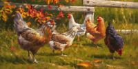 The Garden Club by Mark McKenna Art Print Chicken Rooster Hen Farm Poster 13x19