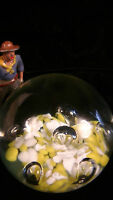 PAPERWEIGHT, GLASS, Yellow and White Frit with 6 large bubbles, lot#A55