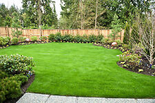 2kg BACK LAWN HARD WEARING TOUGH GRASS SEED IDEAL FOR CHILDRENS PLAY AREAS ETC