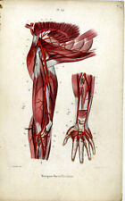 Antique Print-MEDICAL-ARTERIES-ARMPIT-BLOOD-Masse-1843