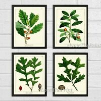 Unframed Botanical Wall Art Print Set 4 Antique Acorns Tree Nature Home Decor