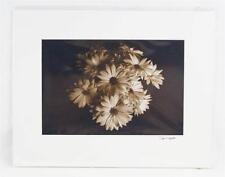 Sepia Photography Fine Art Daisies 11x14