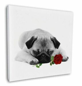 """Pug (B+W Photo) with Red Rose 12""""x12"""" Canvas Wall Art Picture Prin, AD-P92R2-C12"""