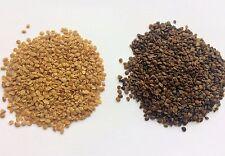 Red&Black Goji berry 2x500+ seeds - MIX DEAL, Lycium Barbarum, Lycium Ruthenicum