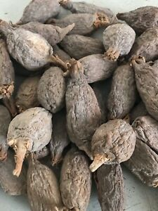 Alligator Pepper - Nigerian Original Very Hot, Spicy Seeds. Eat Now seeds 2 Pods