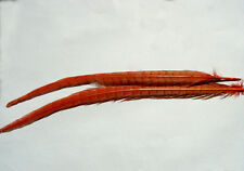 2 x Plume ROUGE queue de FAISAN montage feather fly tying pheasant fagiano fasan