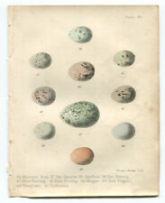 Antique Chromolithograph BIRD'S EGGS print 1858 Magpie, Buntings, Redbreast etc