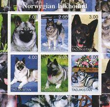 Norwegian Elkhound Canine Animal Dog Tadjikistan 2000 Mnh Stamp Sheetlet