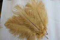 Ten ( 10 )  beige  drabs ostrich feather first grade 375-420MM (15-17)