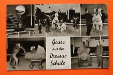 AK Hamburg 1971 Hagenbeck Tierpark Dressurschule Pony Affe Elefant Zirkus Seelöw